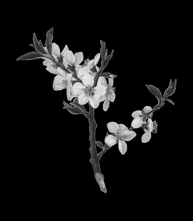 fleur d amandier
